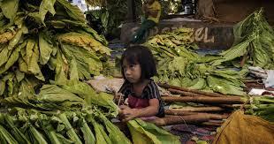 Petani Tembakau: Ada Penumpang Gelap di Kampanye Anti RUU Pertembakauan